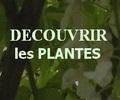 location calanques, quelle est cette plante